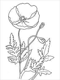 drawn poppy coloring pencil and in color drawn poppy coloring