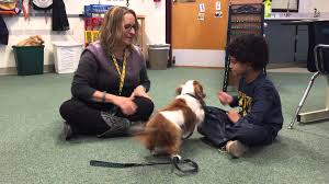 buzz the deaf therapy dog youtube