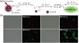osa inorganic nanoparticles for optical bioimaging