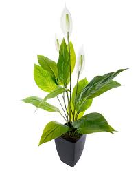 peace lily white large peace lily artificial flowers in modern black pot 100