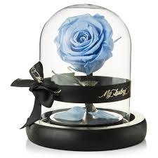 100 beauty and the beast forever rose enchanted rose the