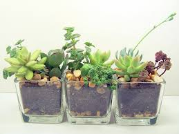 terrarium succulent glass planters kit office plants terraria