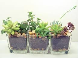 Office Plants by Terrarium Succulent Glass Planters Kit Office Plants Terraria