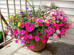 lovely potted flowers on hotel grounds picture of quality inn