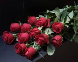 a dozen roses win dozen roses
