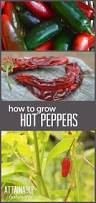 198 best some like it images on pinterest bell pepper chili
