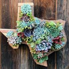 hanging texas succulent garden apartment pinterest texas