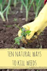 24 best grow your own images on pinterest gardening organic