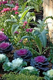3 aesthetic ways to implement food gardens at your home bost