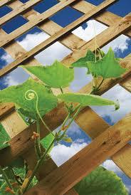 Vegetable Garden Netting Frame by A Pillar Of Strength Garden Center Magazine