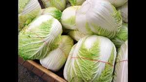 cabbage china cabbage in china