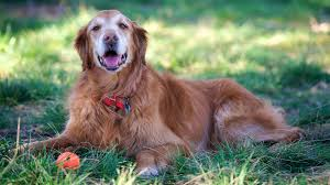 dog euthanasia pet euthanasia veterinarians on when it s time cost and more
