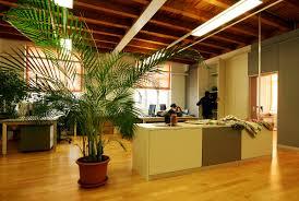 plantes bureau avoir des plantes dans bureau fait pousser la productivité de