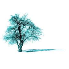 items similar to tree photography turquoise tree nature