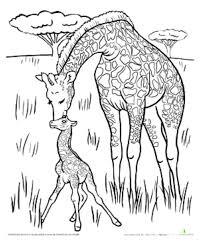 print u0026 download giraffe color page