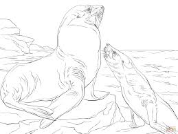 steller sea lions coloring page free printable coloring pages