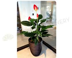 peace lilly new artificial flowers plants t0115 peace plant 120cm orange