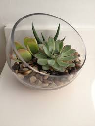 Where Can I Buy Home Decor by Sprinkling U0026 Decorating With Succulents Around The House