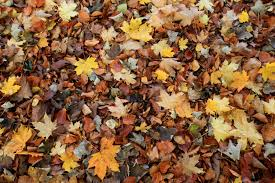 Gunpowder Falls State Park Map by Best Places To See Autumn Leaves In Baltimore Cbs Baltimore