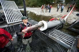 fish cannon 99 invisible