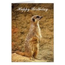 cute meerkat greeting cards zazzle