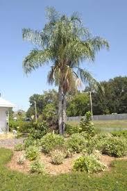 31 best florida friendly landscaping images on pinterest yards