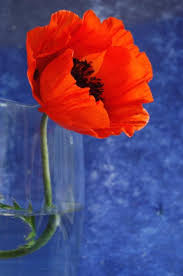 Vase With Red Poppies What I Think Svg Likes Red Poppy Flower Gift Ideas