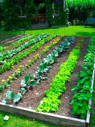 vegetable garden plants vegetable garden plan for beginners