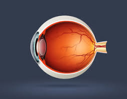 Diseases Of The Eye That Cause Blindness Discovery May Lead To Therapy For Eye Diseases Causing Blindness
