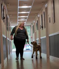 Training A Guide Dog For The Blind Guiding Eyes For The Blind Home Facebook