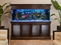 Aquarium Decor Ideas How To Decorate With An Aquarium Fish Tank