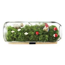 download moss terrariums solidaria garden