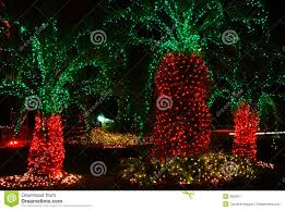 decorated palm trees stock image image of tree untraditional