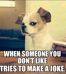 Funny Dog Face Meme - top 30 funny dog pictures with captions bestfunnies com funny