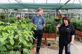 kavey eats chilli growing tips from edible ornamentals