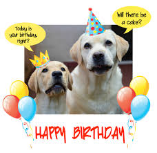 happy birthday dog party free pets ecards greeting cards 123 l