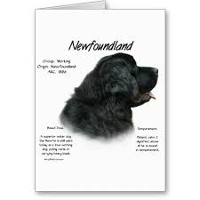 19 best newfoundland cards images on