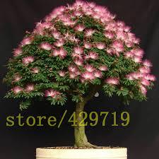 20 pcs bag bonsai flower albizia seeds mini tree seeds mimosa