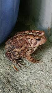 the easiest way to keep a wild caught toad as a pet wikihow