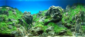 Most Beautiful Aquascapes The 25 Most Extreme Aquariums In The World
