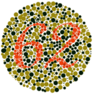 Color Blind What Do They See What Kind Of Tests Do Doctors Use To Identify If The Candidate Is