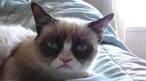 Sleepy Cat Meme - sleepy grumpy cat youtube
