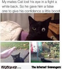 Missing Cat Meme - cat lost his eye in a fight funny meme pmslweb