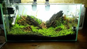 japanese aquascape glorious hall of champions