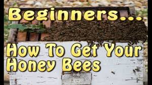 beginning beekeepers how to get your honey bees youtube