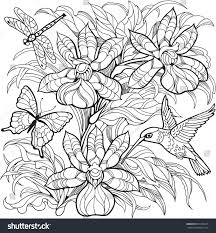 orchid flowers insects hummingbirdvector coloring page stock