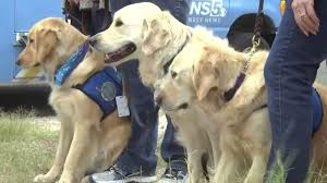 Comfort Dog Certificate 9 Comfort Dogs Report For Duty In Texas U0027they Don U0027