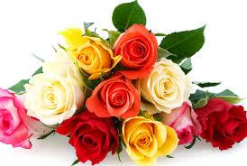 roses colors hhllcks de