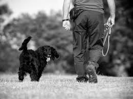 affenpinscher how much do they cost puppy and dog walking tips