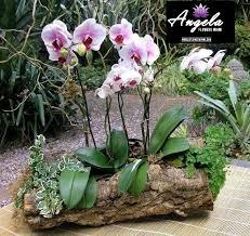 orchid plant orchid plant arrangement 1 angelaflowersmiami